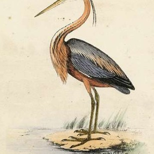 Antique Heron II Digital Print by Unknown,Traditional