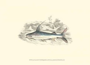 Lizars Game Fish IV Digital Print by Lizars, W.H.,Decorative