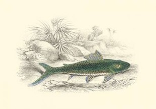 Lizars Game Fish I Digital Print by Lizars, W.H.,Decorative