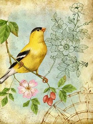 Songbird Sketchbook III Digital Print by Maday, Jane,Decorative
