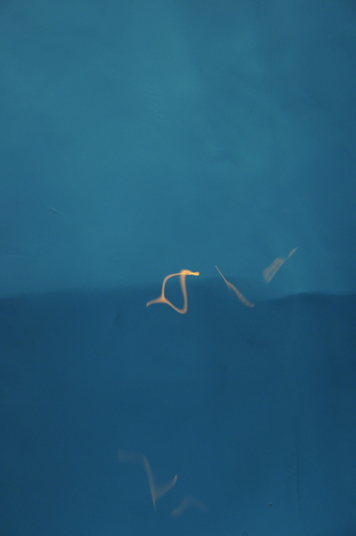 Untitled by Ravi Shail, Image Photography, Digital Print on Archival Paper, Blue color