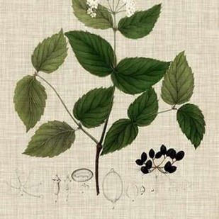 Linen and Leaves I Digital Print by Vision Studio,Decorative