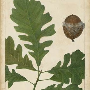 Oak Leaves and Acorns III Digital Print by Torrey, John,Decorative