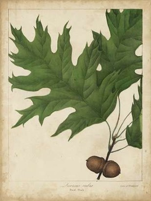 Oak Leaves and Acorns II Digital Print by Torrey, John,Decorative