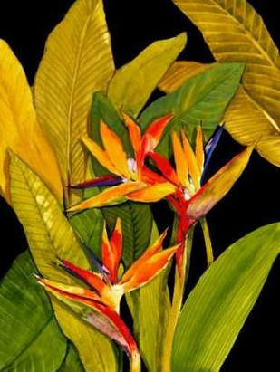 Dramatic Bird of Paradise Digital Print by OToole, Tim,Realism