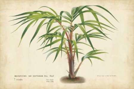 Palm of the Tropics VI Digital Print by Van Houtteano, Horto,Realism