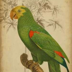 Parrot and Palm III Digital Print by Vision Studio,Realism