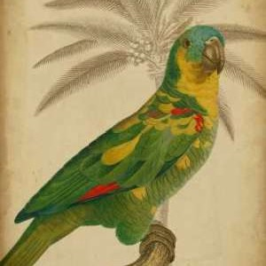 Parrot and Palm II Digital Print by Vision Studio,Realism