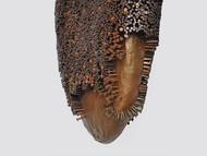 Honey comb by Janarthanan R, Conceptual Sculpture | 3D, Mixed Media on Wood, Gray color