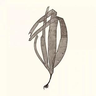 Seaweed Collection V Digital Print by Vision Studio,Impressionism