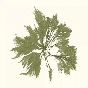 Seaweed Collection III Digital Print by Vision Studio,Decorative