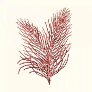 Seaweed Collection II Digital Print by Vision Studio,Realism