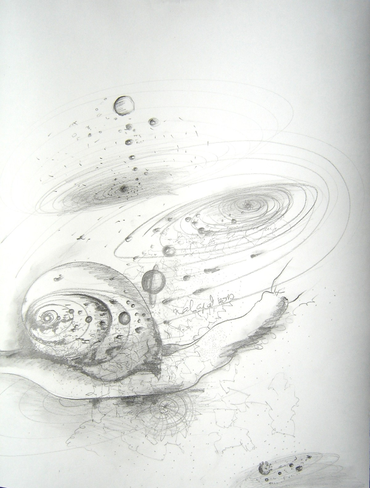 Tortoise Nautilus Venus and Us-The spiral connections that we share by Anuradha Nalapat, Illustration Drawing, Charcoal on Paper, Gray color