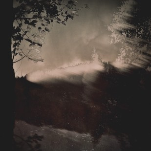 The Enchanted Forest in Sepia by Tanya Palta, Image Photography, Digital Print on Paper, Gray color