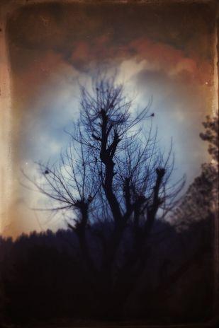 The Enchanted Tree Artwork By Tanya Palta