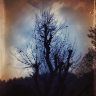The Enchanted Tree by Tanya Palta, Image Photography, Digital Print on Paper, Brown color