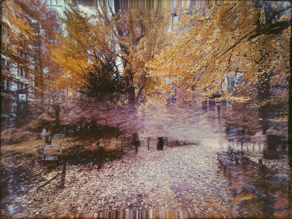 Autumn In The Enchanted Forest by Tanya Palta, Image Photography, Digital Print on Paper, Brown color