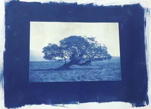 Tree of Life by Jagrut Raval, Impressionism Printmaking, Permanent Ink on Paper, Blue color