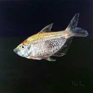 Fish II by Prakash Pore, Photorealism Painting, Acrylic on Canvas, Black color