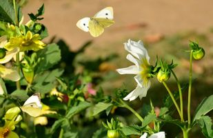 Butterfly series by Nin Taneja, Image Photography, Print on Canvas, Green color