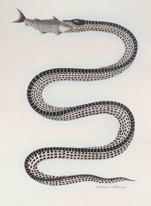 Snake with fish in mouth by Bhaskar Chitrakar, Traditional Painting, Natural colours on paper, Gray color