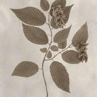 Arbor Specimen II Digital Print by Vision Studio,Decorative