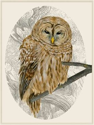 Barred Owl I Digital Print by Wang, Melissa,Impressionism
