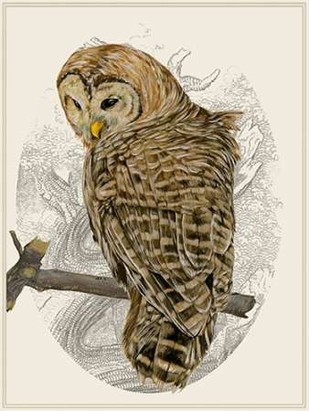 Barred Owl II Digital Print by Wang, Melissa,Impressionism