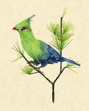 Green Turaco II Digital Print by Wang, Melissa,Impressionism