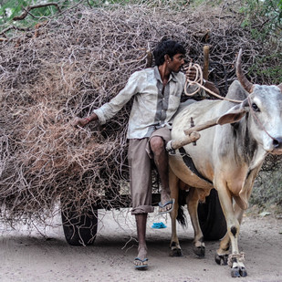 Bullock cart Rajasthan by Uday Tadphale, Image Photography, Digital Print on Canvas, Gray color