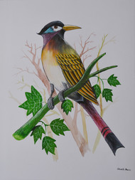 Bird painting (10) by santosh patil, Painting, Watercolor on Paper, Gray color