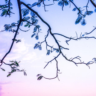 Branches by Natraj Vemuri, Image Painting, Digital Print on Archival Paper, Pink color