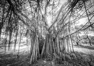 Tree of Life by Dinesh Shringi, Image Photography, Canvas on Board, Gray color