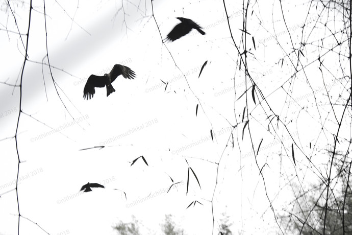 Birds by Shari, Image Photography, Digital Print on Canvas, White color