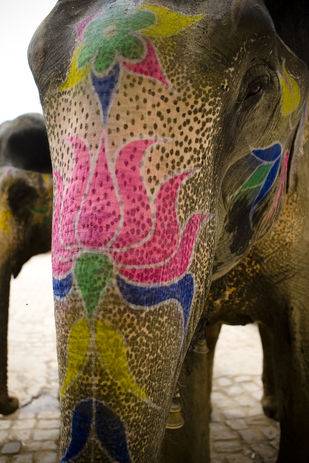 the Jaipur Elephant by Gautam Vir Prashad, Image Photography, Giclee Print on Hahnemuhle Paper, Brown color
