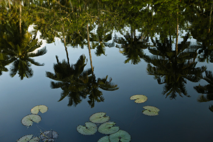 Lily Pad Reflections by Gautam Vir Prashad, Image Photography, Giclee Print on Hahnemuhle Paper, Green color