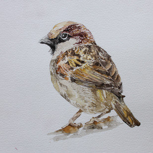 House Sparrow by Rudrakshi , Impressionism Painting, Watercolor on Paper, Gray color