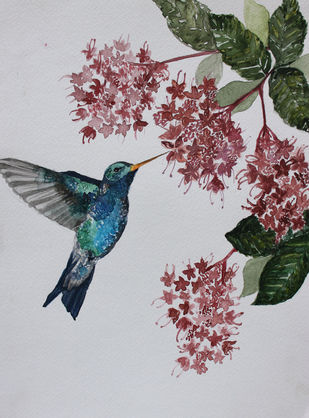 Hummingbird and flaming glorybower by Rudrakshi , Impressionism Painting, Watercolor on Paper, Gray color