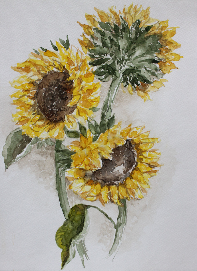 Sunflower in Bloom by Rudrakshi , Impressionism Painting, Watercolor on Paper, Gray color