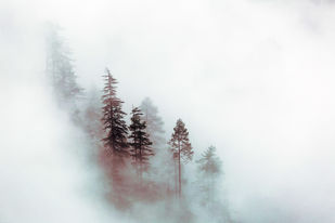 The Mist by Ridhiin Pancchmatia, Image Photography, Print on Canvas, Gray color