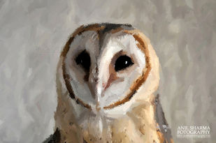 Glimpses of India-5 Baby Barn Owl !!! by Anil Sharma, Image Photography, Digital Print on Archival Paper, Brown color