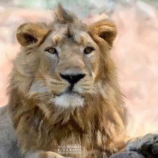 Glimpses of India-6 Portrait of Lion King by Anil Sharma, Image Photography, Digital Print on Archival Paper, Beige color