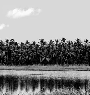 Palm Trees # 5 by M. Shafiq, Image Photography, Digital Print on Archival Paper, Gray color