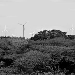 Wind Mills by M. Shafiq, Image Photography, Digital Print on Archival Paper, Gray color