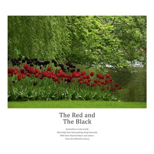 The Red and The Black by Berny & Philip, Image Photography, Print on Paper, Green color