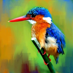 KINGFISHER-17 Digital Print by The Print Studio,Expressionism