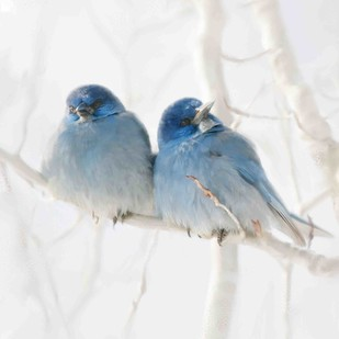 BLUE BIRDS-21 Digital Print by The Print Studio,Expressionism