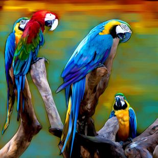 MACAWS Digital Print by The Print Studio,Expressionism