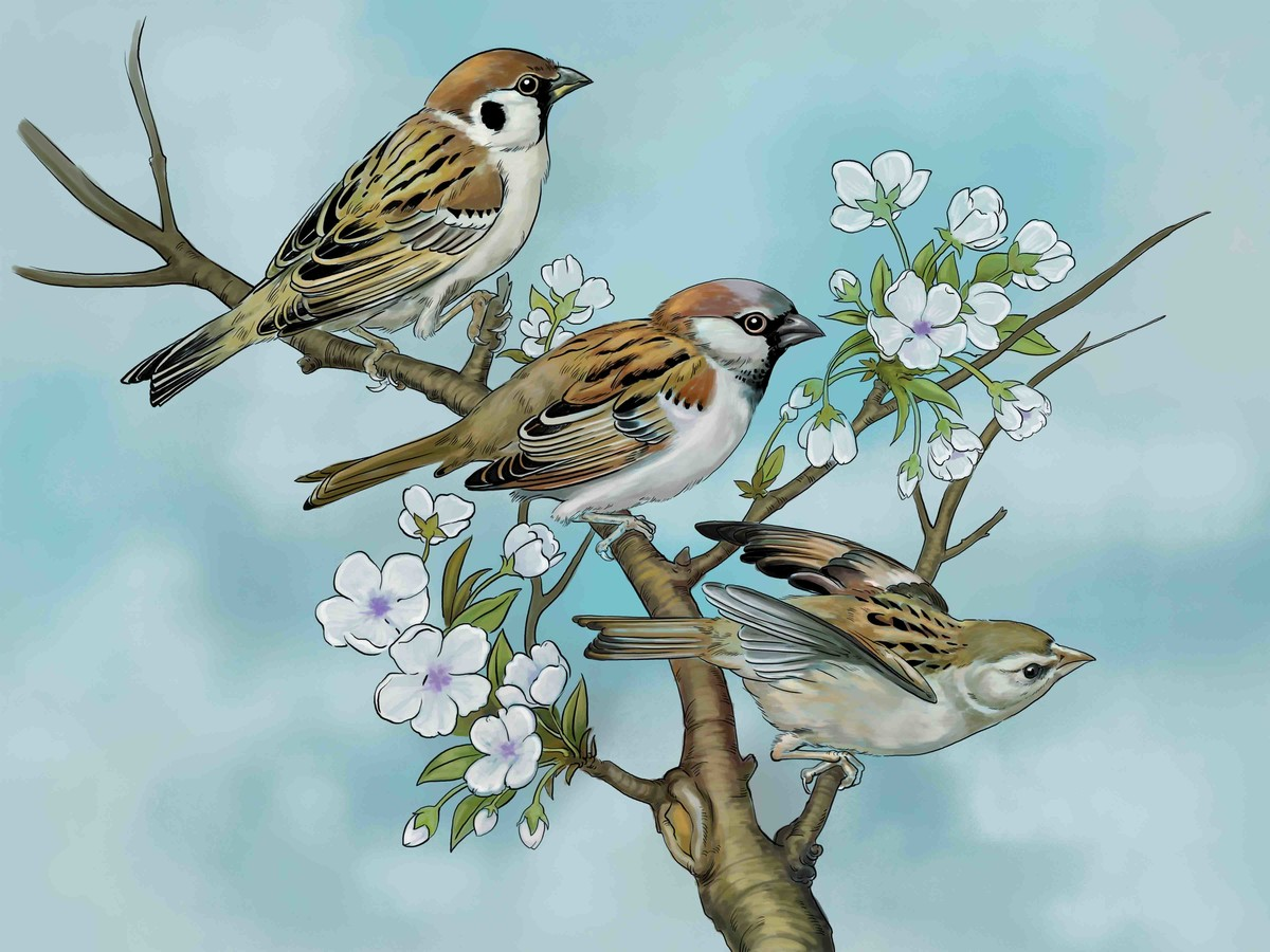 LITTLE BIRDS-41 Digital Print by The Print Studio,Digital