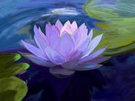 Lilly in pond - 61 Digital Print by The Print Studio,Digital